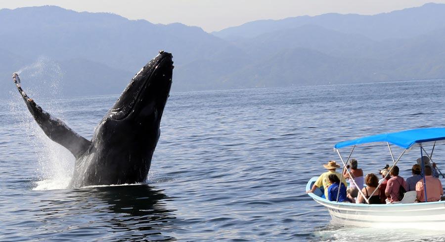 Avistamiento ballenas Puerto Vallarta
